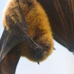 Nei boschi di Villa Ada sono arrivate le Bat Box