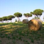 Settimana delle aree protette, da domani e fino al 2 giugno le iniziative di Legambiente nel Lazio per salvaguardare le aree protette