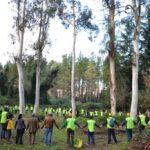 Festa dell'albero 2014: settecento alberi piantati da 10.000 volontari in oltre 50 eventi nel Lazio