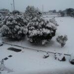 Alberi neve, Legambiente: evitare abbattimenti inutili
