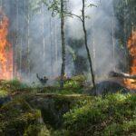 Allarme incendi, Legambiente: taglio fondi mette a rischio patrimonio ambientale regionale