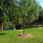 350 nuovi alberi al Pratone delle Valli Legambiente e Comune di Roma per gli obiettivi di Kyoto concludono iniziativa forestazione nel Parco Regionale dell'Aniene